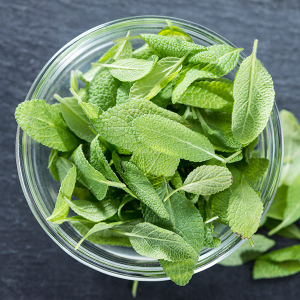 pure sage leaf extract