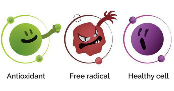 Antoxidants fight free radicals which seek to destroy our healthy cells (including brain-cells)