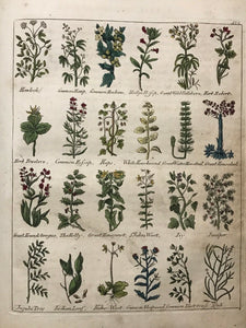 CULPEPER'S ENGLISH PHYSICIAN AND COMPLETE HERBAL, 1805 - ILLUSTRATED PLATES