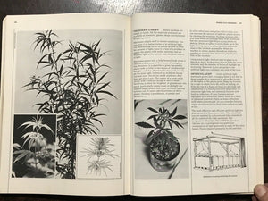 HIGH TIMES ENCYCLOPEDIA OF RECREATIONAL DRUGS - 1978 - HISTORY USES TYPES