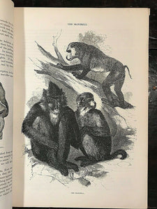 CASSELL'S POPULAR NATURAL HISTORY, 1860 - w/ 1500 ENGRAVINGS, Mammals Birds Fish