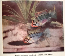 EXOTIC AQUARIUM FISHES, by William T. Innes, 1953 Illustrated Color