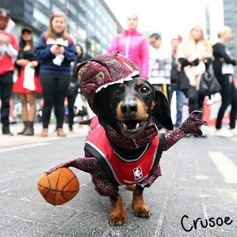 Photo from https://instagram.com/crusoe_dachshund