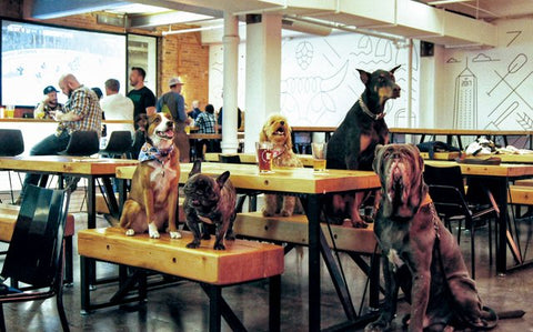 Photo from http://mspmag.com/arts-and-culture/general-interest/9-dog-friendly-breweries-in-the-twin-cities/