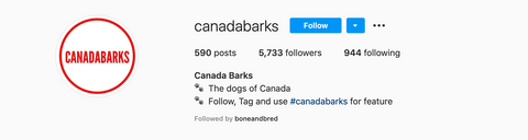 instagram account CanadaBarks for IG dog features