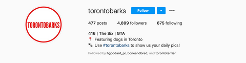 Toronto instagram dog feature account called Toronto Barks