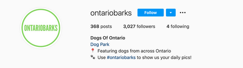 ontario instagram dog feature account called Ontario Barks