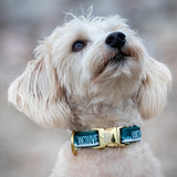 The collar every dog wants at the Vancouver dog park: a gold buckle with a vancouver skyline print