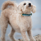 Made for dogs of Vancouver, the teal and silver YVR collar