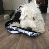 Sheepadoodle with Toronto leash in black and white