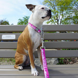 Boston terrier dog wearing Toronto dog collar and Toronto leash in pink