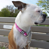Toronto martingale collar in pink