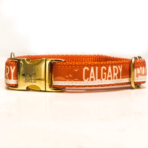 The downtown Calgary dog collars and leashes from Bone and Bred. Seen here in Orange.
