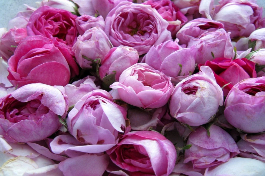 Roses, a simple and unbelievably sexy addition to your beauty routine!