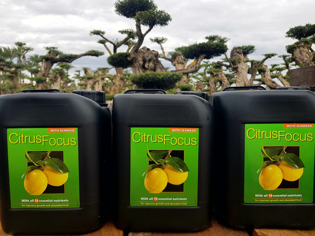 Citrus Focus Fertilizer