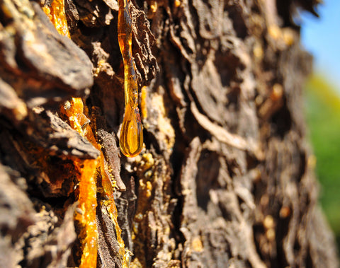 resinous-tree-sap-amber