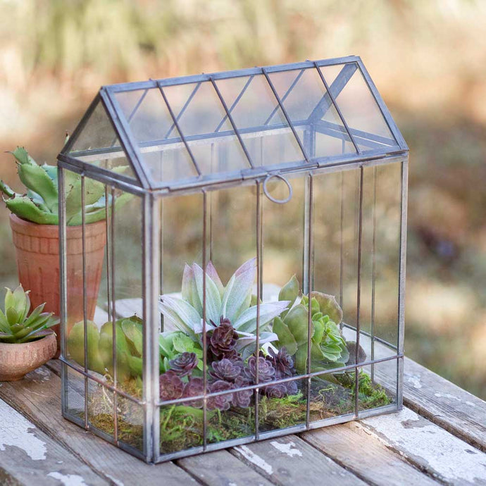 Ribbed Glass Terrarium