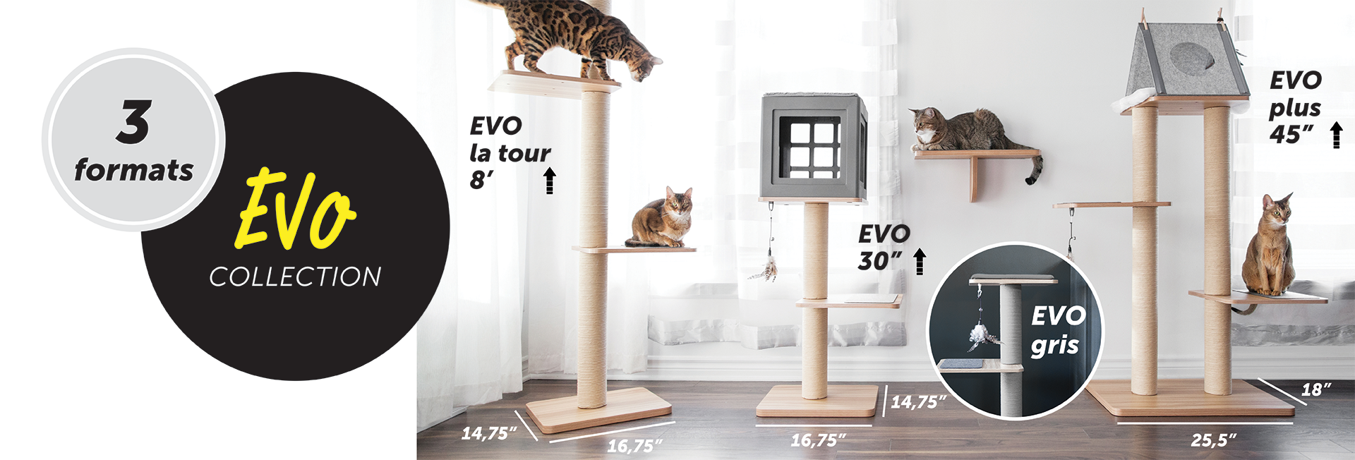 Katt3-evo-gray-possibilities-for-cats-french