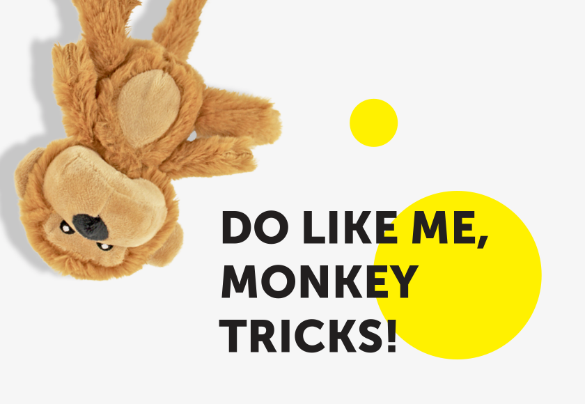 baby-monkey-toy-for-dogs-english