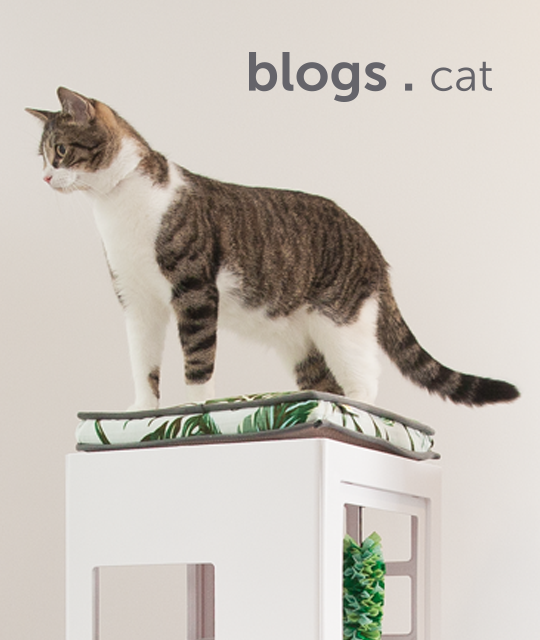 blogs-for-cats-english