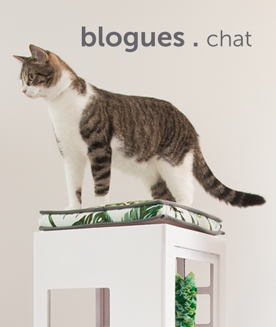 blogs-for-cats-french