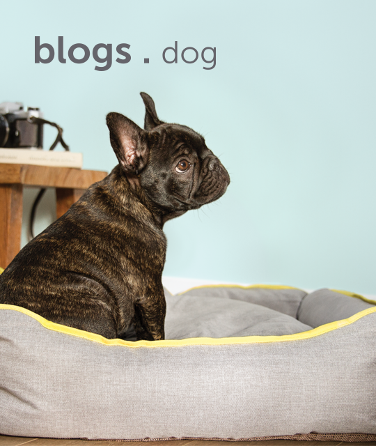 blogs-for-dogs-english