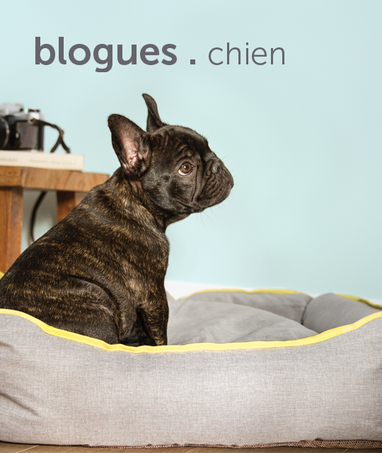 blogs-for-dogs-french