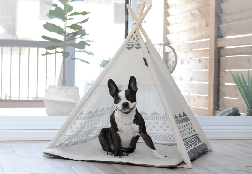 comfortable-tent-for-dogs-english