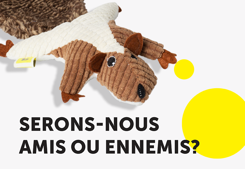 fun-squirrel-toy-for-cats-french