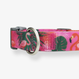 hypoallergenic-silicone-collars-pink-flamingos-for-dogs-english
