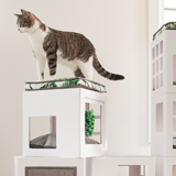 memory-foam-bed-Katt3-accessories-house-for-cats-english