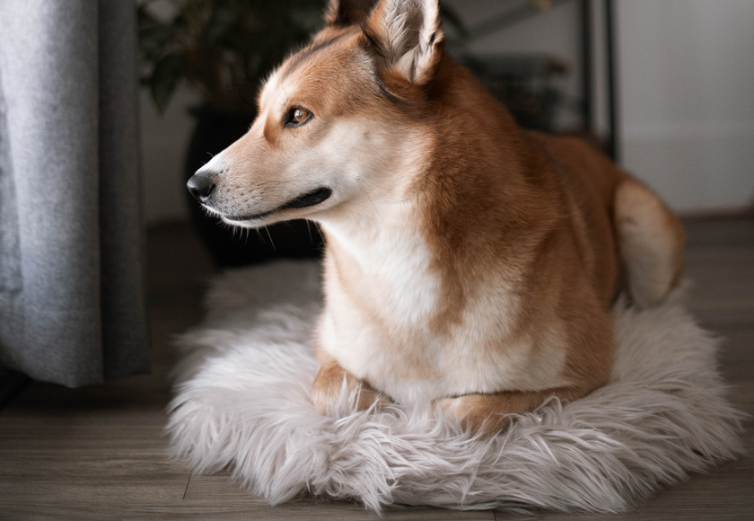 memory-foam-chic-chalet-fur-bed-for-dogs-english