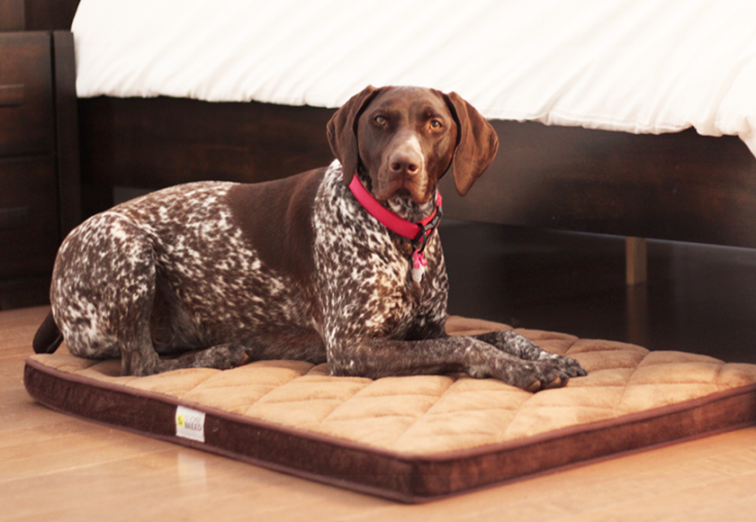 memory-foam-diamond-bed-for-dogs-brown-english