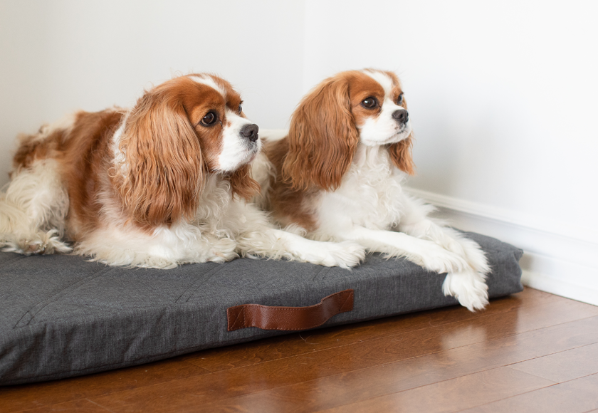 memory-foam-powernap-bed-for-dogs-english