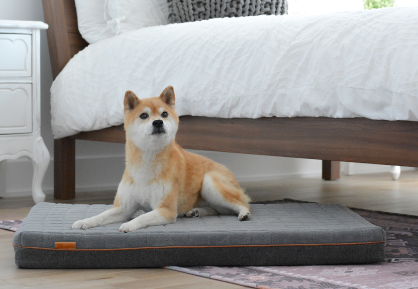memory-foam-relaxation-bed-for-dogs-english