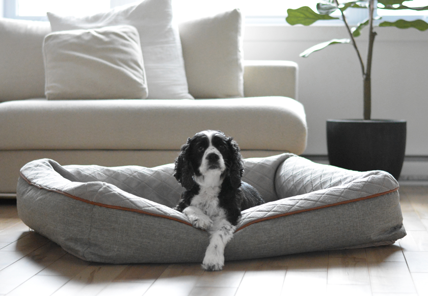 memory-foam-snuggle-bed-for-dogs-english
