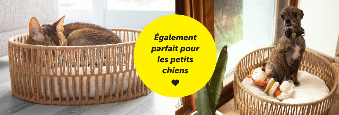 pet-basket-small-dogs-french