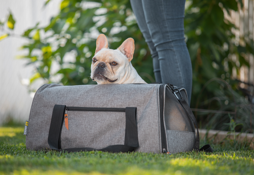 pet-carrier-all-in-one-for-dogs-gray-english