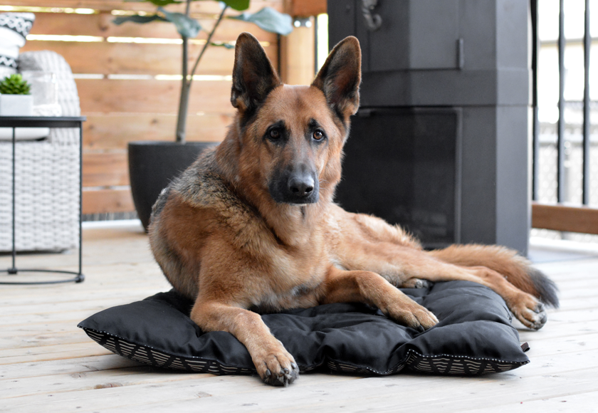 reversible-nature-bed-for-dogs-english