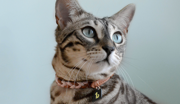 rope-collar-pink-for-cats-english