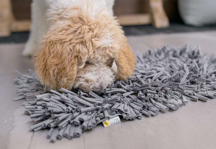 sniff-out-mat-for-dogs-gray-english