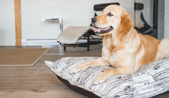 Ultra-Soft-cloud-pillow-wood-for-dogs-english