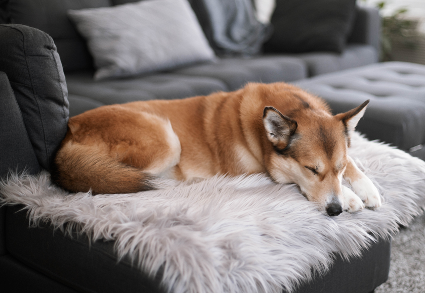 ultra-cozy-chic-chalet-blanket-for-dogs-english