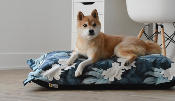 ultra-soft-cloud-pillow-peonies-for-dogs-english