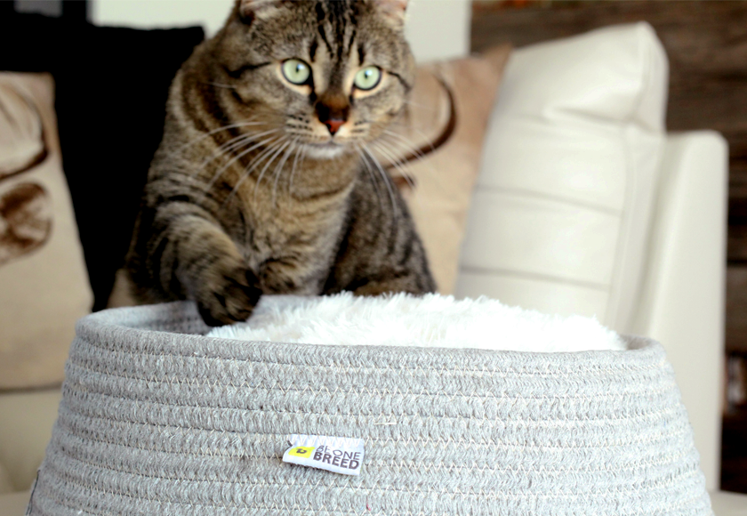 ultra-soft-comfort-retreat-for-cats-english