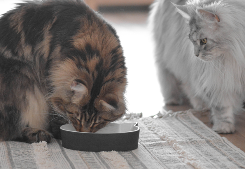 water-fresh-trendy-porcelain-bowl-for-cats-english