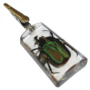 Stand-Up Emerald Rose Chafer Clip