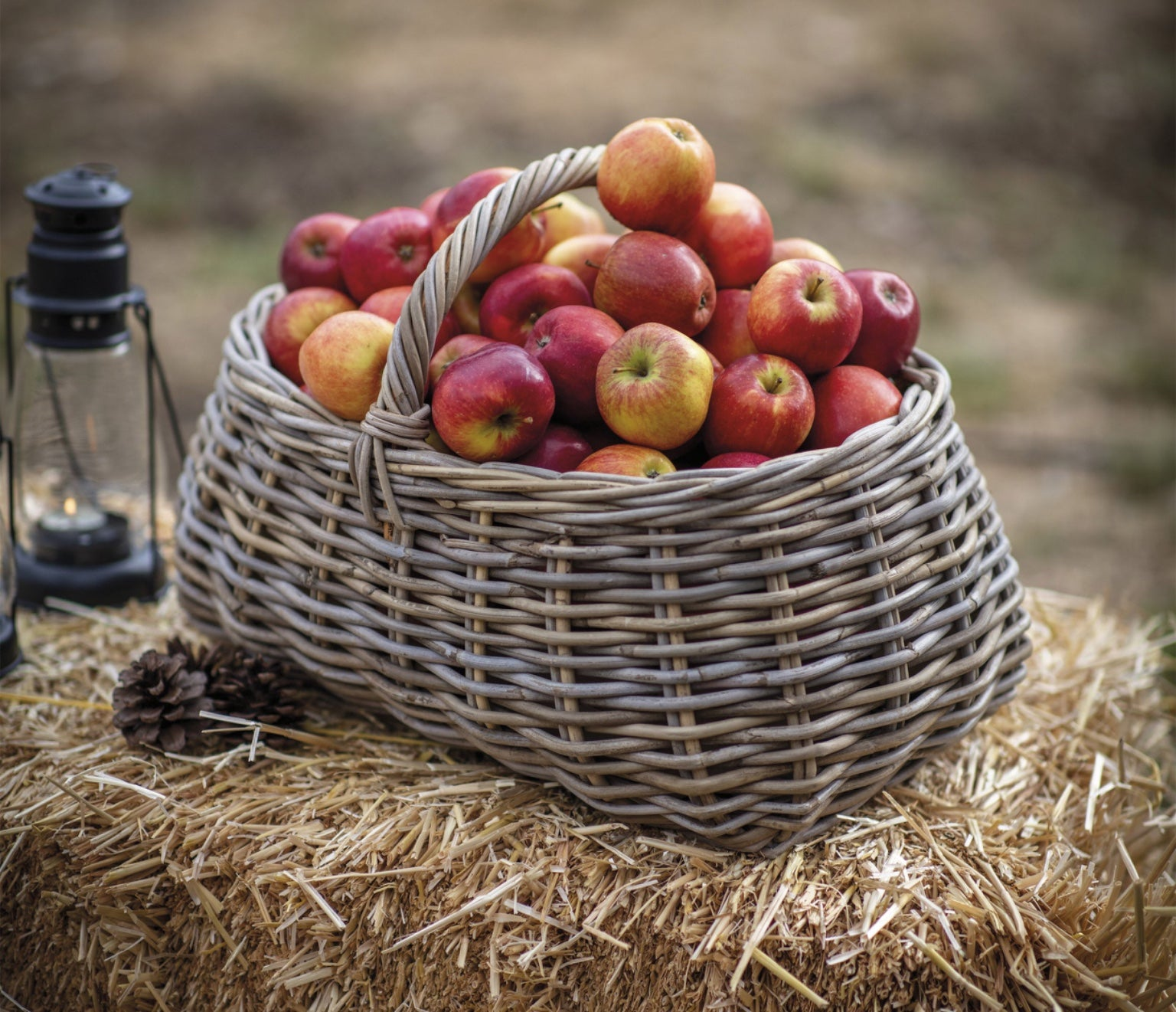 Forage Basket
