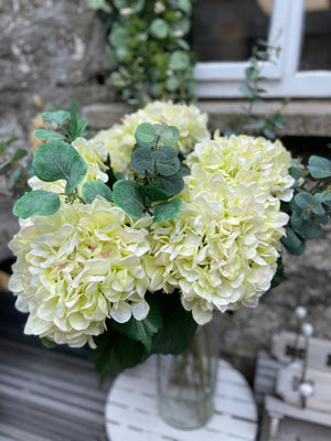 Mop Head Hydrangea- Pale Green