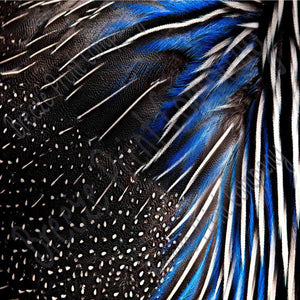 Feather pattern printed craft  vinyl sheet - HTV -  Adhesive Vinyl -  peacock feathers black white blue HTVF4 - Breeze Crafts